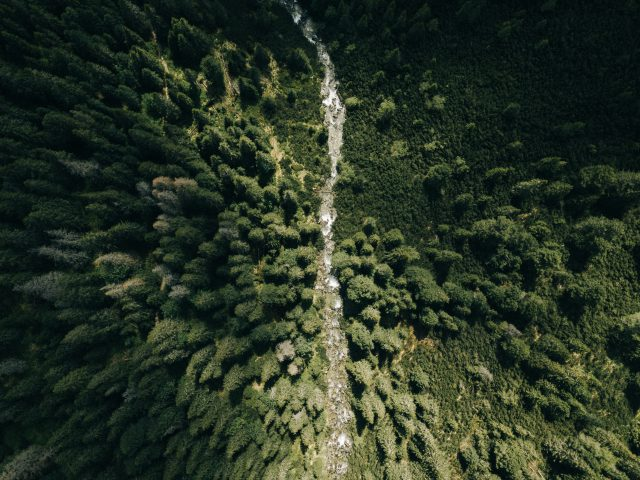 Firs from above