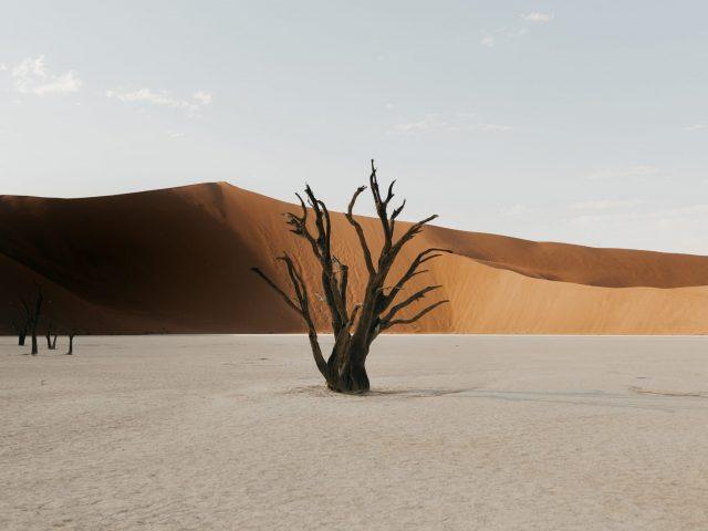 Dead tree in Deadvlei