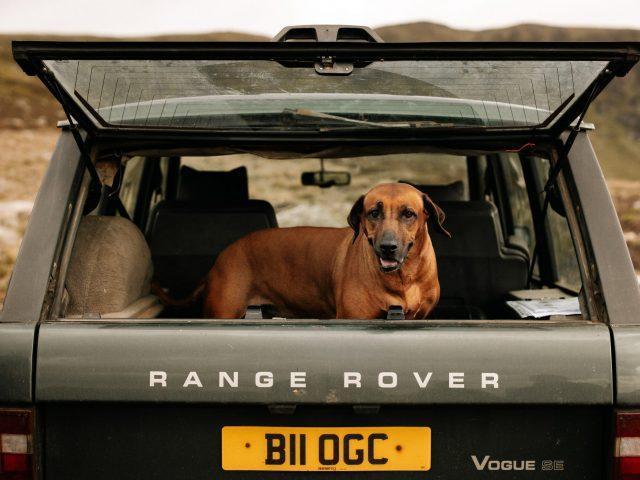 Range Rover + Rhodesian Ridgeback