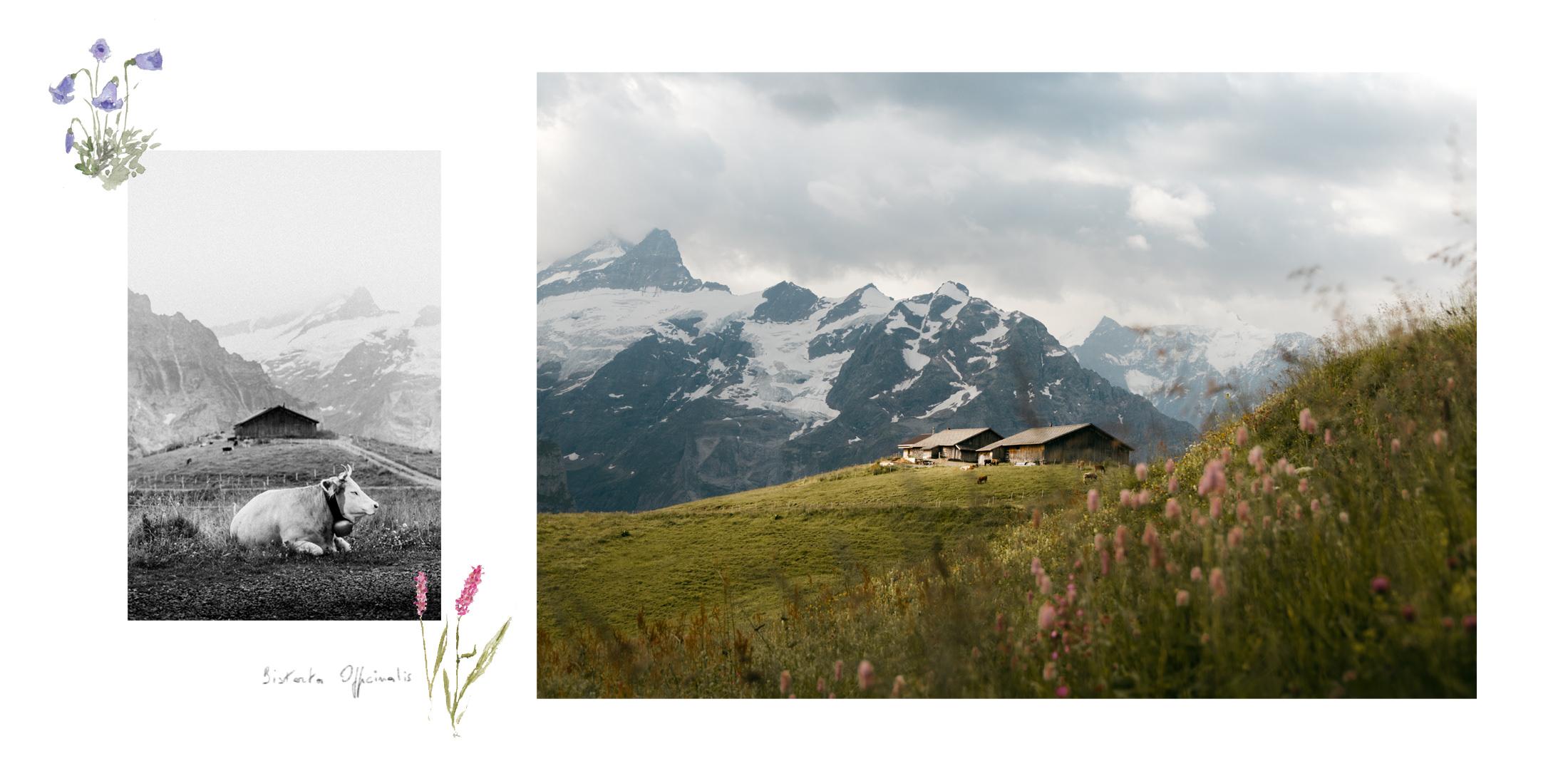 Grosse Scheidegg - First