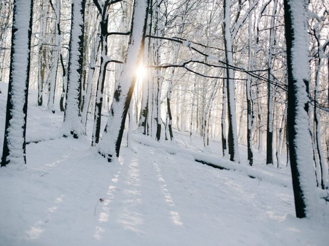 Woods covered of snow