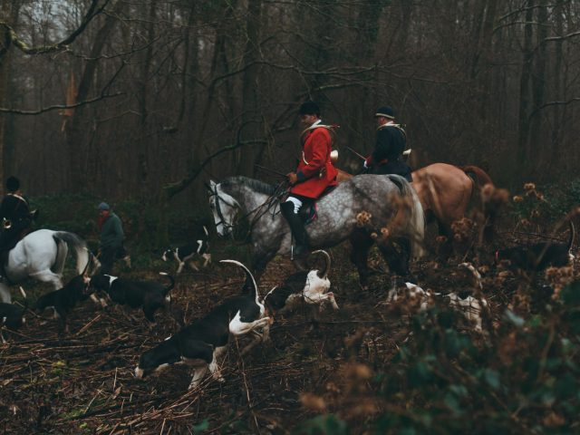Hounds & Horses