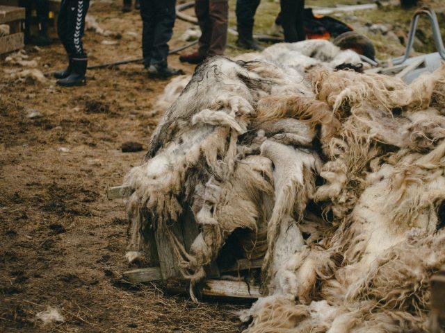 Wool fur