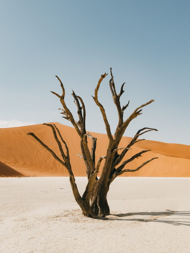 Deadvlei - lonely tree