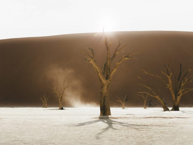 Deadvlei - dead tree