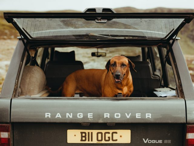 Dog in the Land Rover