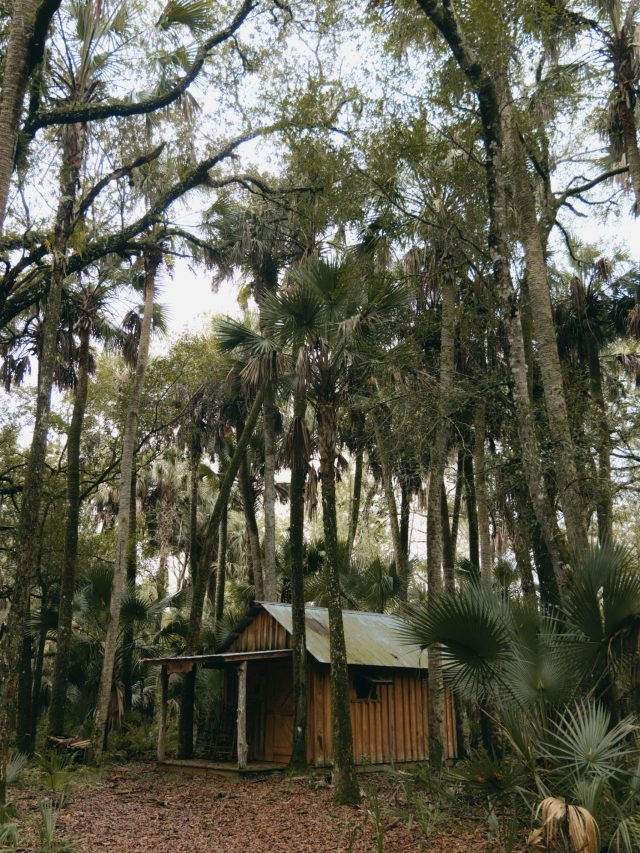 Cabin in the woods - Florida